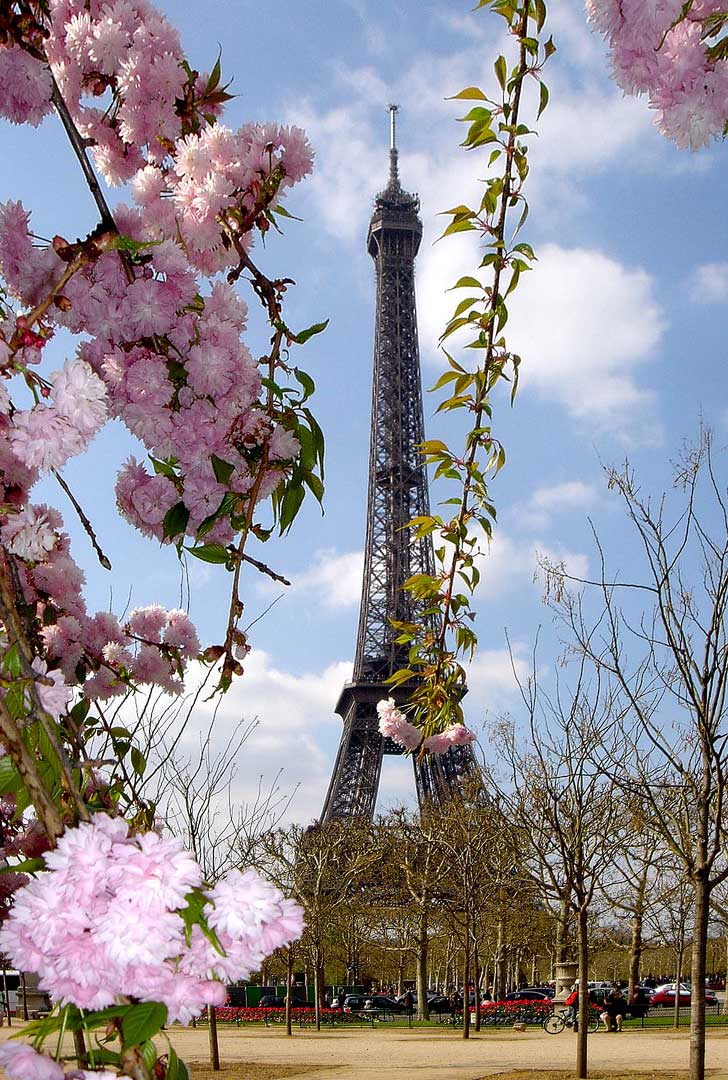 15 Amazing Places To See Cherry Blossoms In The World