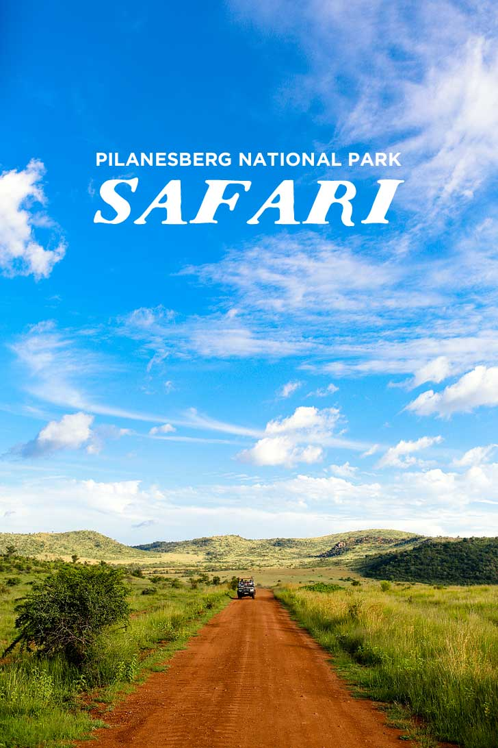 An Amazing Safari Day Trip to Pilanesberg National Park from Johannesburg South Africa // localadventurer.com