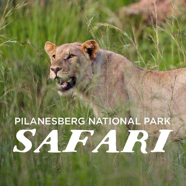Pilanesburg National Park Safari – Day Trip from Johannesburg