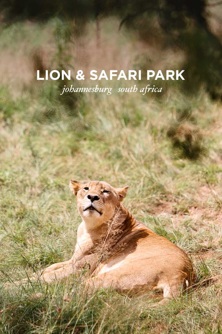 The Lion Park Johannesburg South Africa - great way to see the big 5 and they have different safaris based on your time // localadventurer.com