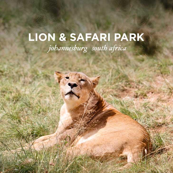 The Lion Park Johannesburg South Africa