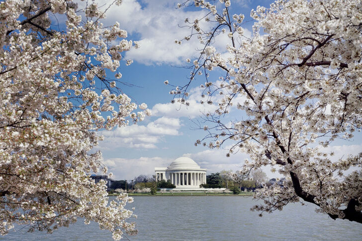 Tidal Basin + Best Place to See Cherry Blossoms in the US // Local Adventurer #cherryblossom #spring #washingtondc
