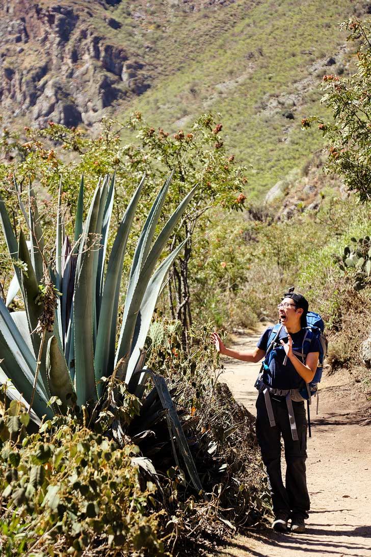 Inca Trail Photos and Travelogue // localadventurer.com