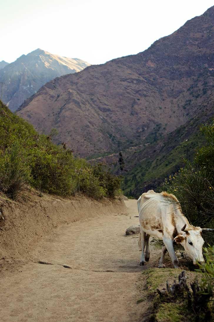 Fauna on the Inca Path to Machu Picchu // localadventurer.com