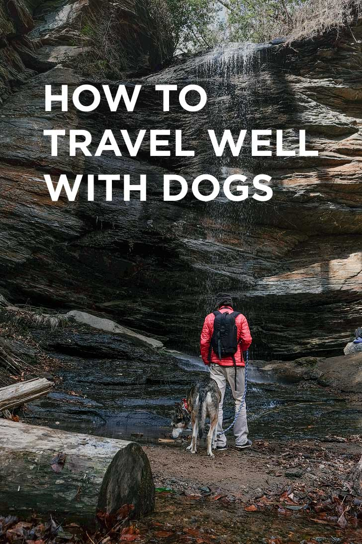 How to Travel with a Dog - Essential Dog Travel Tips // localadventurer.com
