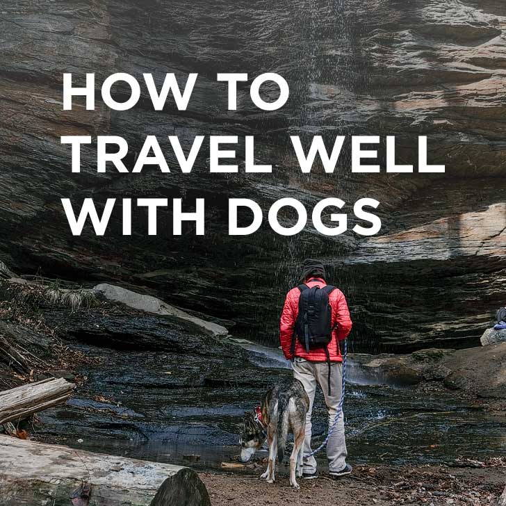 How to Travel with a Dog – Essential Dog Travel Tips