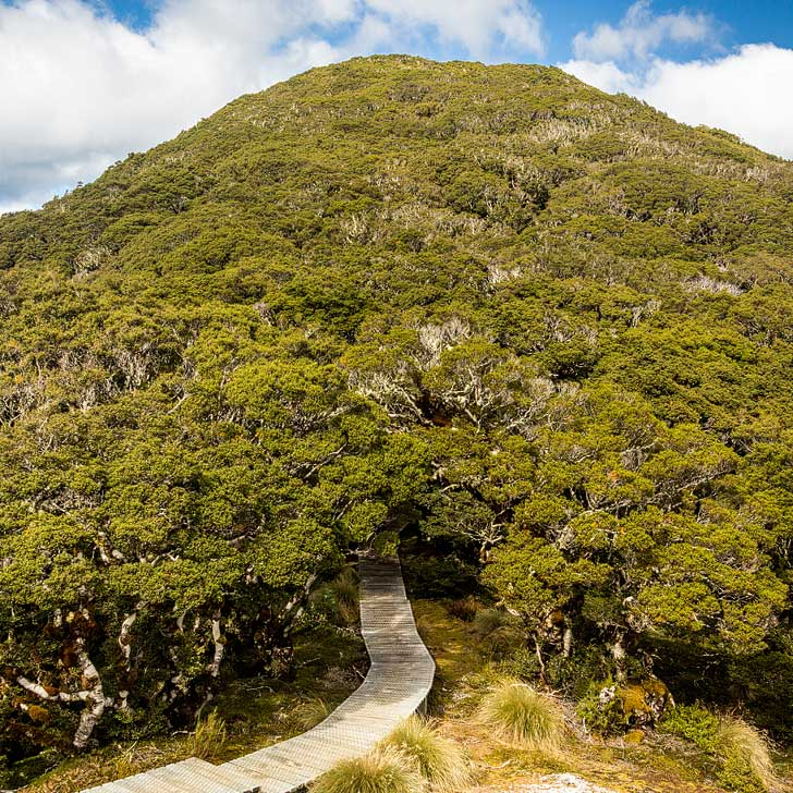 Hump Ridge Track New Zealand + Best Hiking Trails in the World to Put on Your Bucket List (photo: Harald Selke) // localadventurer.com