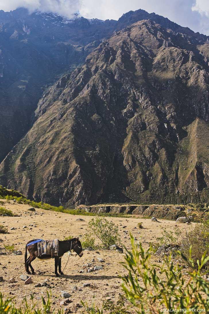 Inca Trail Information // localadventurer.com