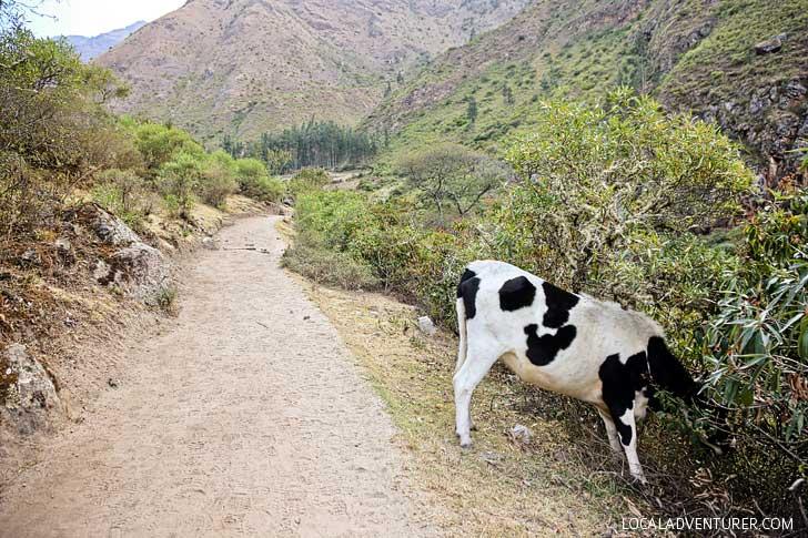 Inca Trail Photos // localadventurer.com