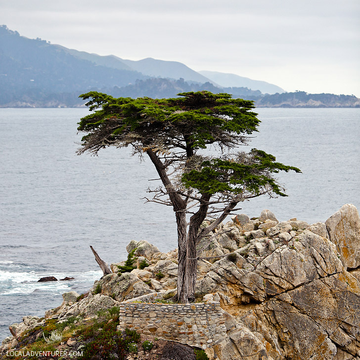 17 Mile Drive + 15 Amazing Things to Do in Monterey California // localadventurer.com