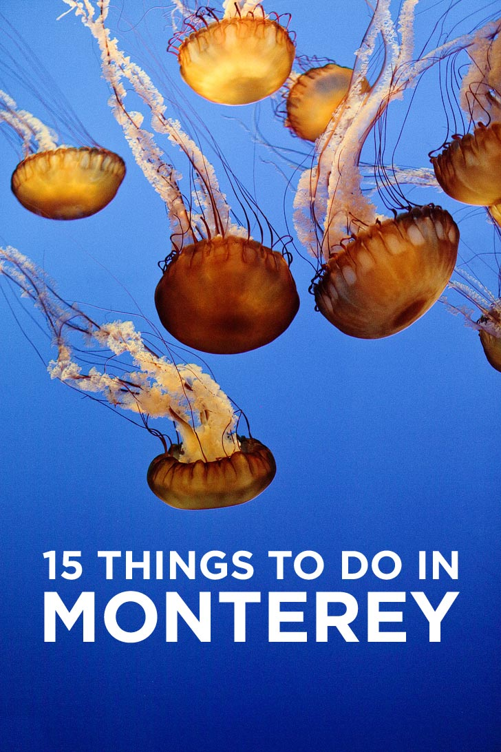 Heading to the Monterey Peninsula. You don't want to miss these 15 things to do in Monterey California. It's also a great home base for exploring Big Sur // localadventurer.com