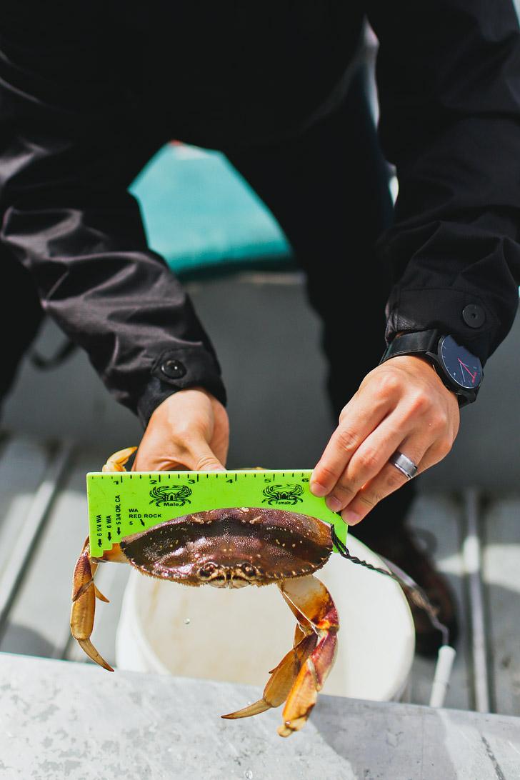 How to Catch Dungeness Crab Oregon // localadventurer.com