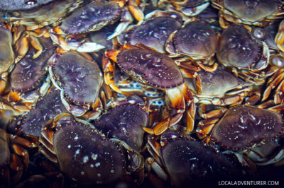 Dungeness Crab Oregon Coast + When and Where to go Crabbing in Oregon // localadventurer.com