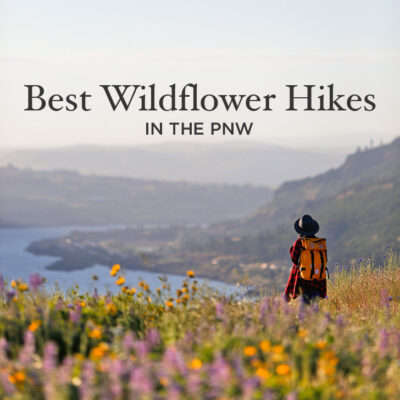 Best Wildflower Hikes in the PNW - Where to Find the Best Wildflowers in the Pacific Northwest // localadventurer.com