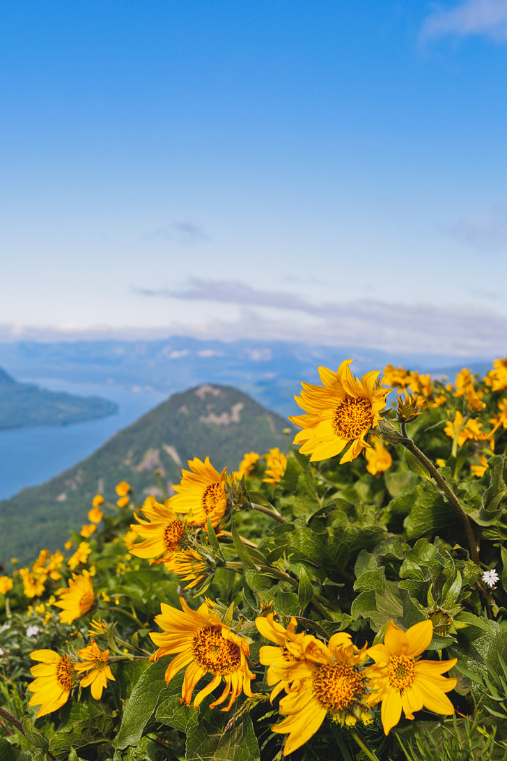 Dog Mountain Washington Hikes - Best WIldflower Hikes Near Portland Oregon // localadventurer.com