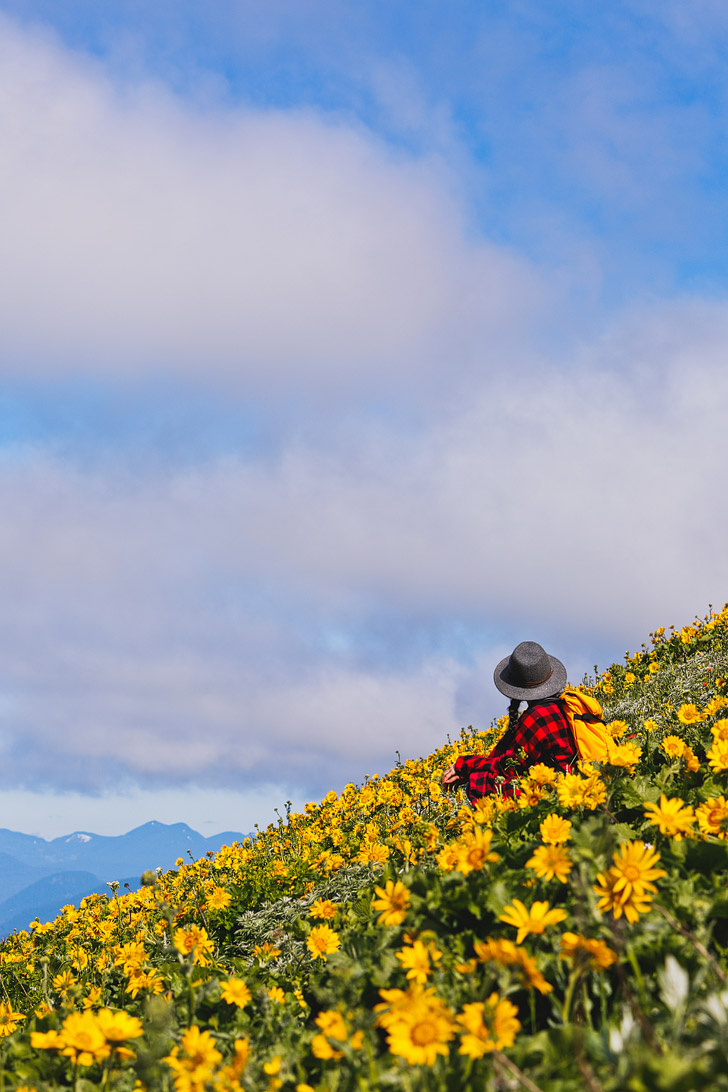 Dog Mountain Hike - Best Wildflower Hike Near Portland Oregon // localadenturer.com