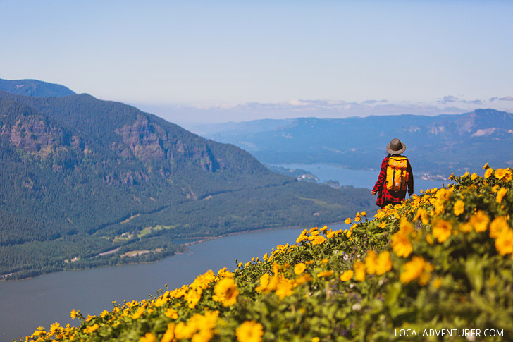 Dog Mountain, Columbia River Gorge, Washington, USA // localadventurer.com