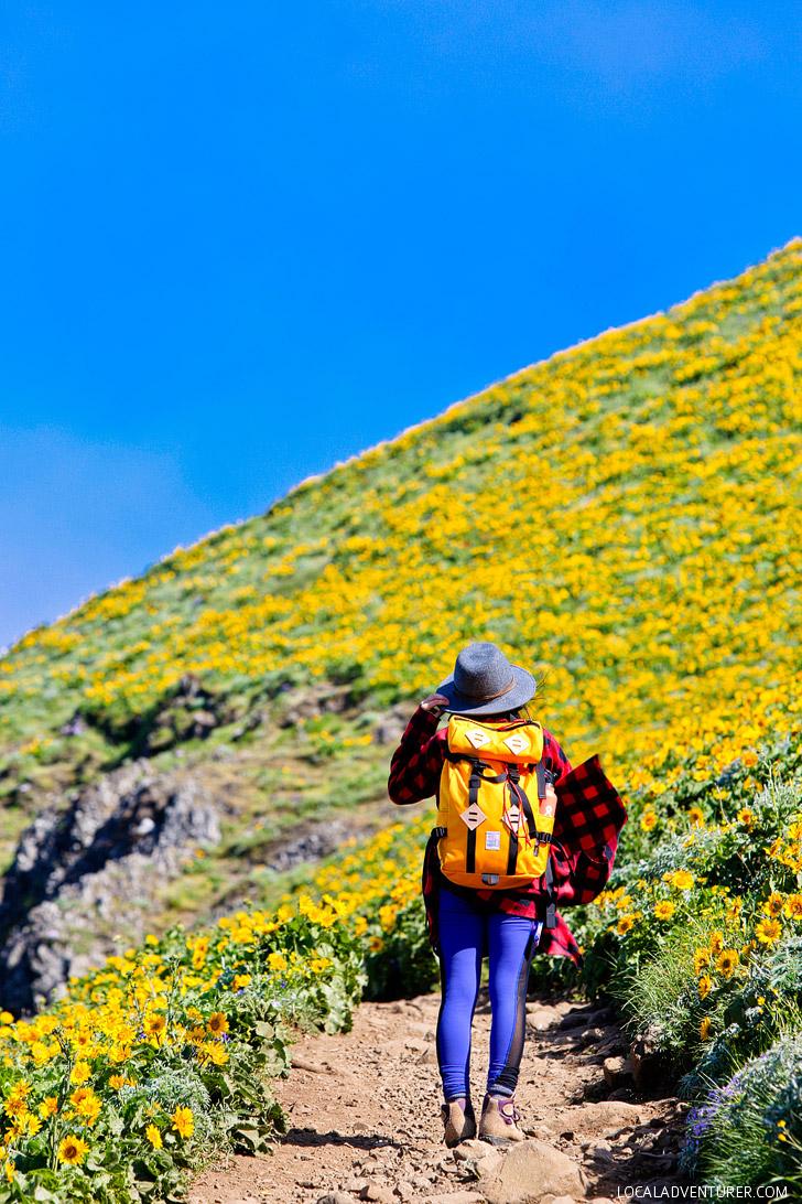 Tips for Hiking Dog Mountain, Columbia River Gorge, Washington // localadventurer.com