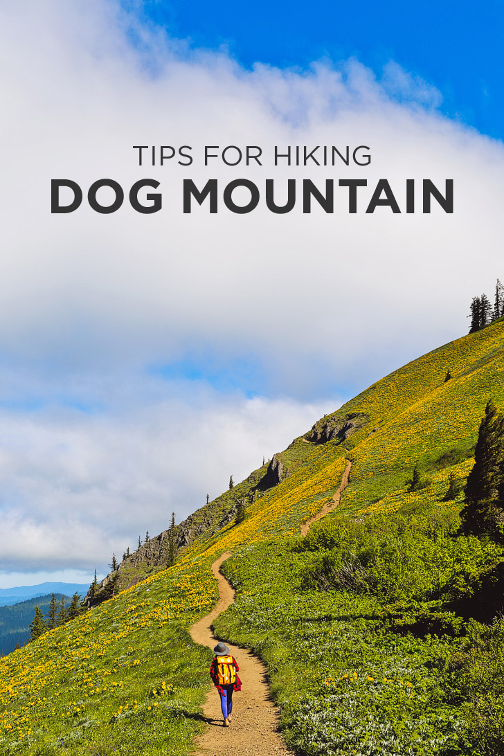 Tips for Hiking Dog Mountain, Columbia River Gorge, Washington // localadventurer.com