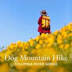 Dog Mountain Hike Washington – Best Wildflowers Near Portland
