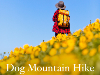 Hiking Dog Mountain - Best Wildflower Hike Near Portland Oregon // localadventurer.com