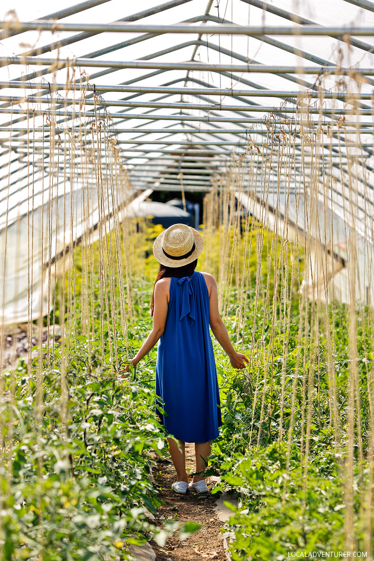 10 Acres Farm and 10 Acres Kitchen + The Best Places to Eat in Victoria BC // localadventurer.com