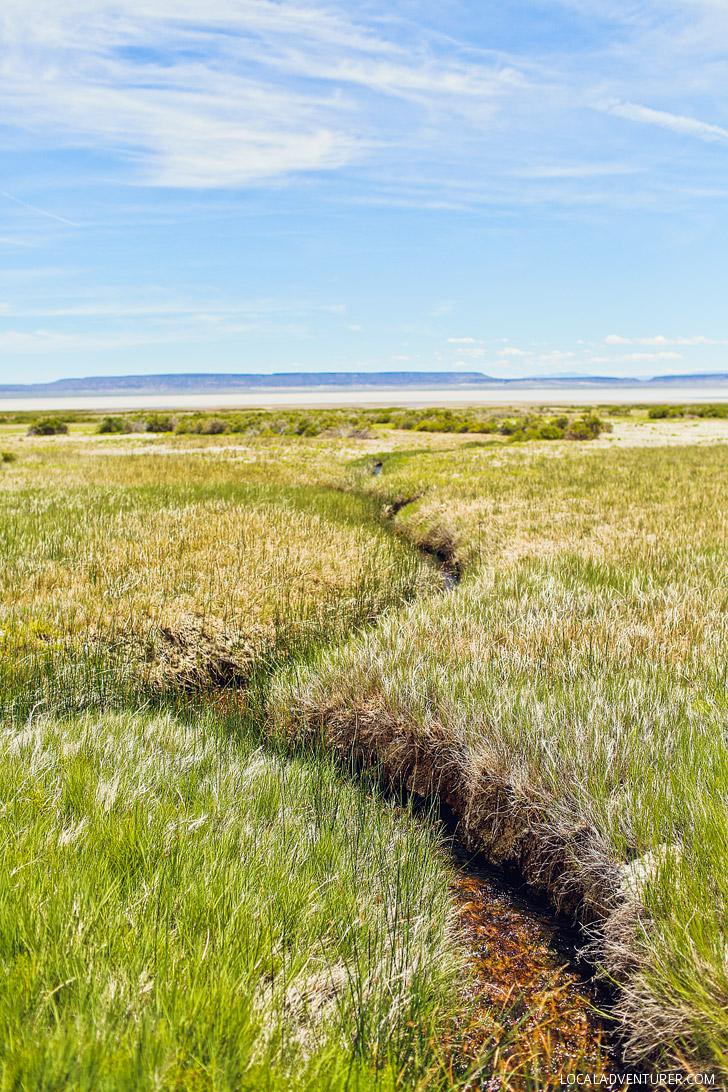 Your Essential Guide To Alvord Desert Oregon 187 Oregon