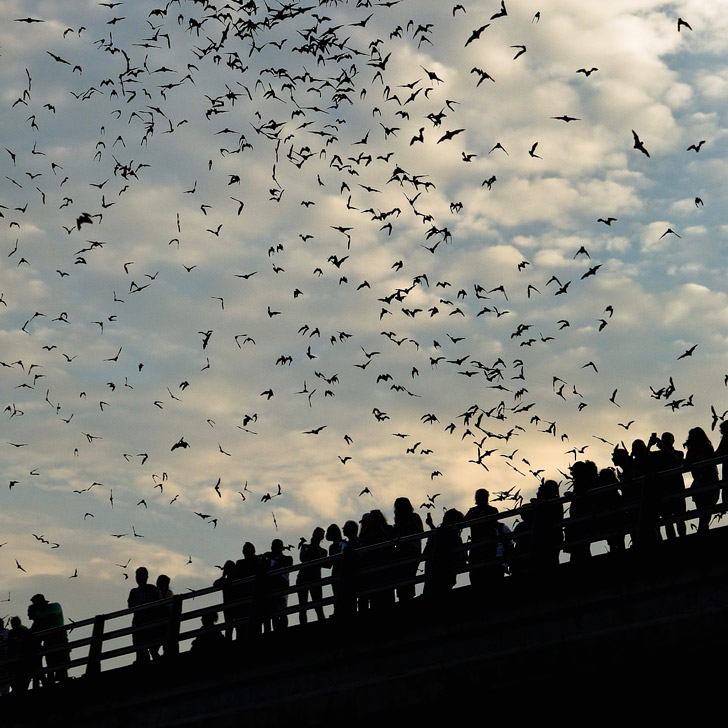 Congress Bridge Bats + 101 Things to Do in Austin Texas - The Ultimate Austin Bucket List // localadventurer.com