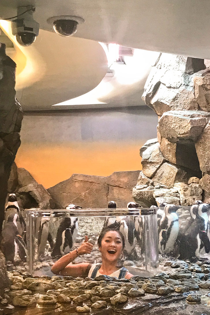 Amy Okuda + Atlanta Aquarium Penguins // localadventurer.com