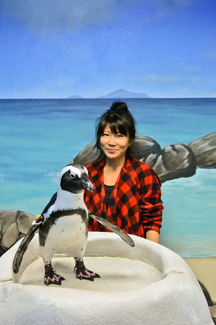 Penguin Encounter + Best Things to Do in the Georgia Aquarium / Atlanta Aquarium Tips // localadventurer.com