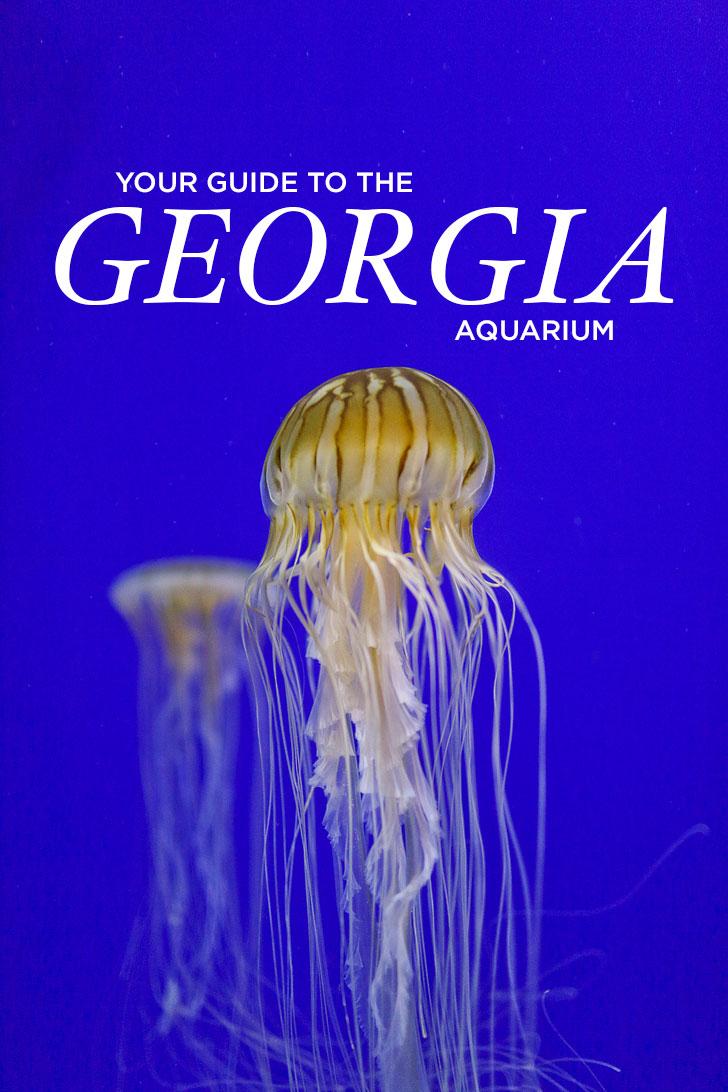 Best Things to Do at the Georgia Aquarium / Georgia Aquarium Tips / Downtown Atlanta Attractions // Local Adventurer