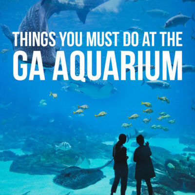 Best Things to Do at the Georgia Aquarium - Atlanta Attractions // localadventurer.com