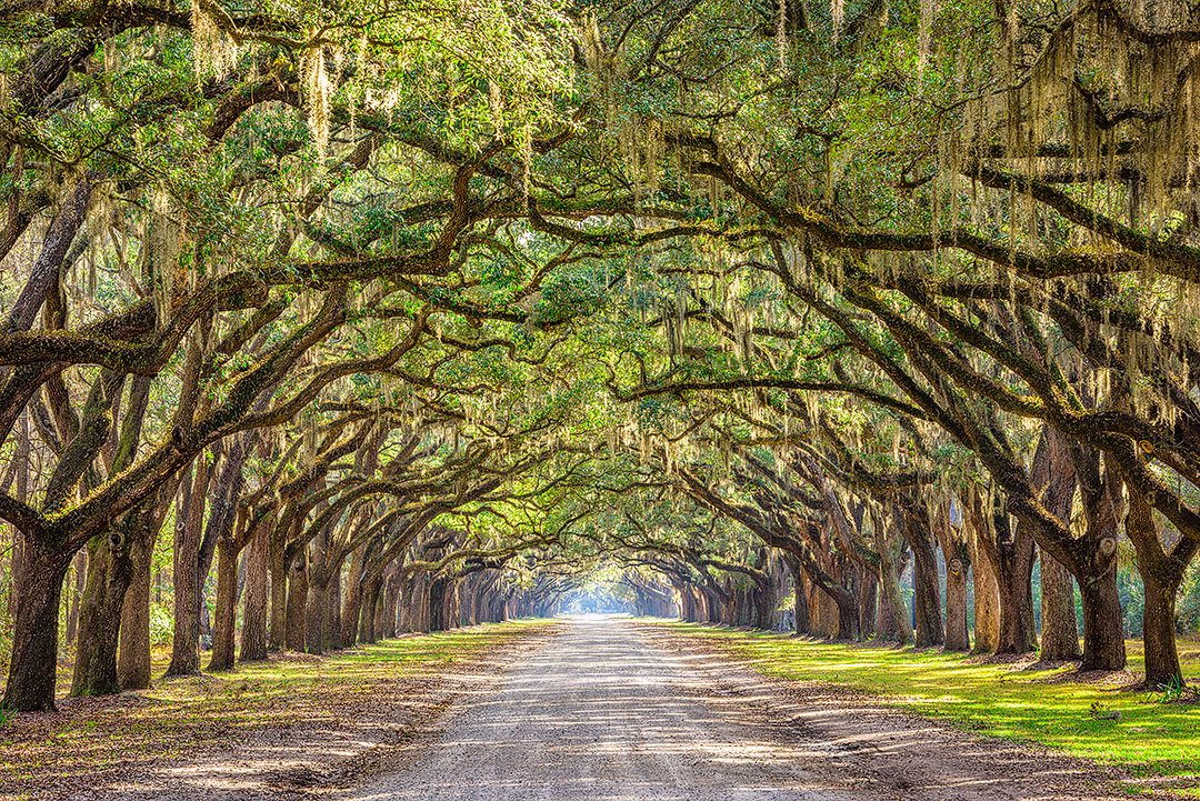 Wormsloe Historic Site Savannah Georgia + 15 Amazing Weekend Trips from Atlanta