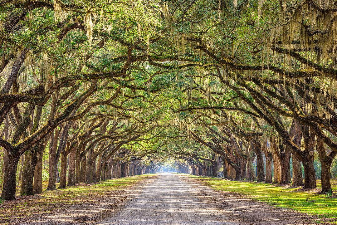 Wormsloe Historic Site Savannah Georgia + 15 Amazing Weekend Trips from Atlanta
