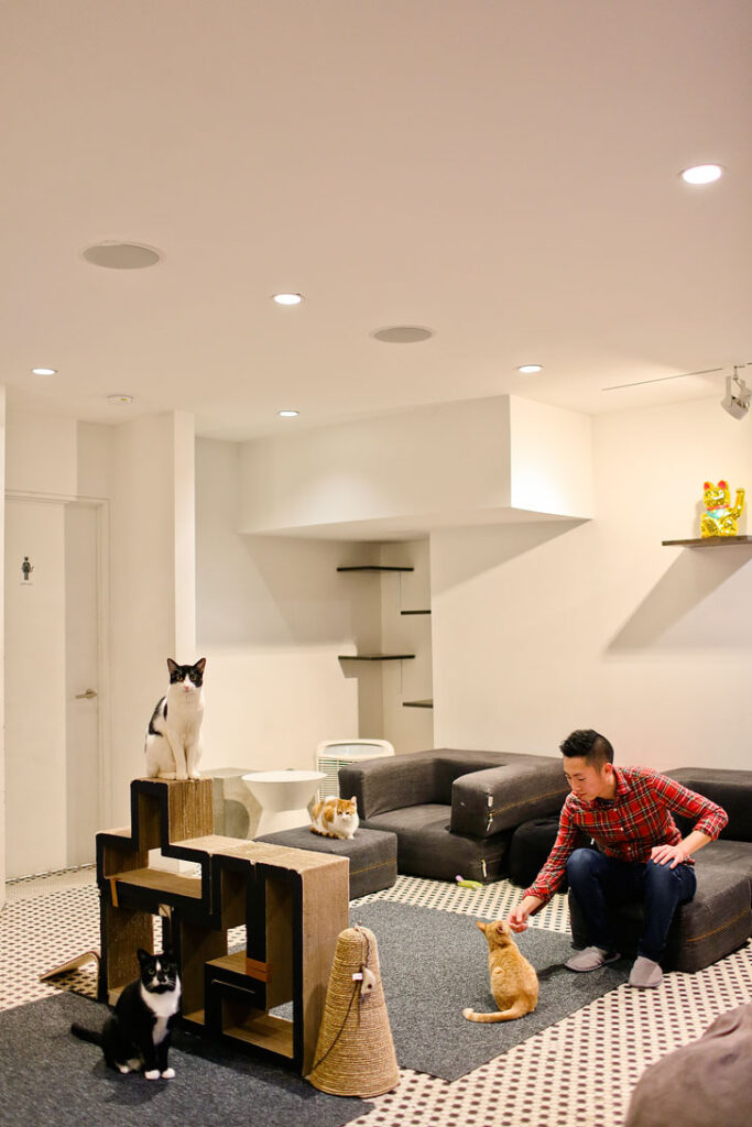 Koneko Cat Cafe + 25 Best Things to Do Indoors in NYC
