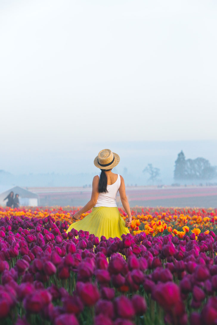 Your Ultimate Guide to the Woodburn Tulip Farm Oregon - What You Need to Know Before You Go - More Amazing Tulip Festivals in the US You Must See // Local Adventurer