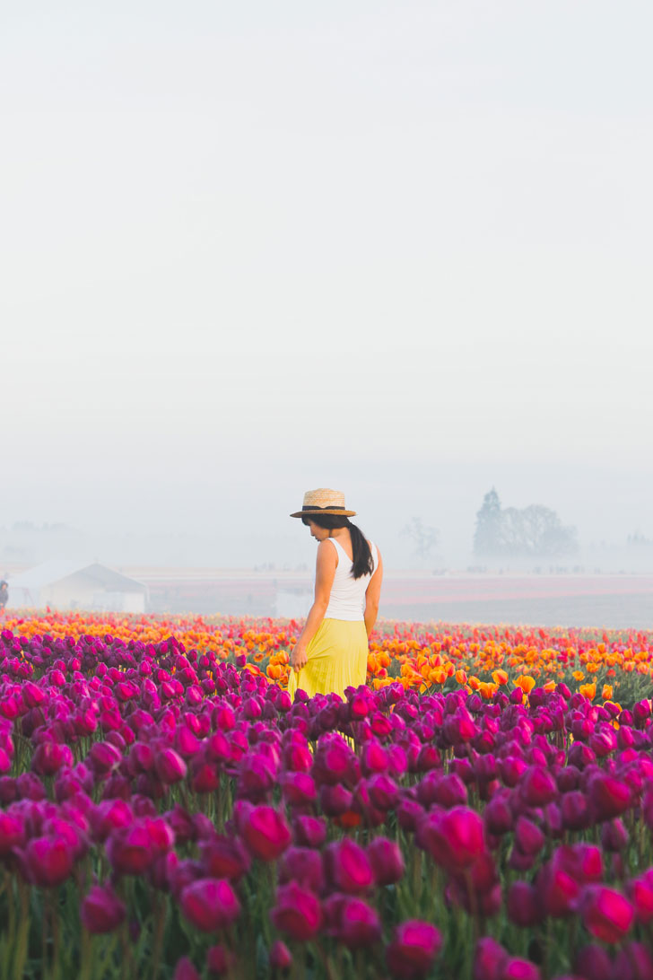 Your Ultimate Guide to the Wooden Shoe Tulip Farm Oregon - What You Need to Know Before You Go - More Amazing Tulip Festivals in the US You Must See // Local Adventurer