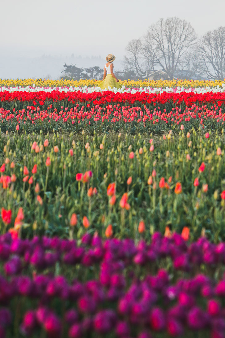 What You Need to Know Before You See the Woodburn Farm Tulips // Local Adventurer