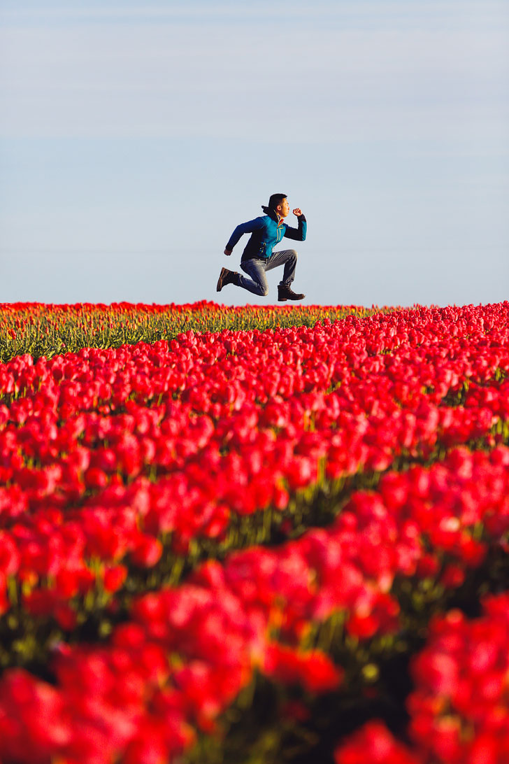 Everything You Need to Know About Tulip Festivals in the US + The Largest Tulip Festival in USA // Local Adventurer