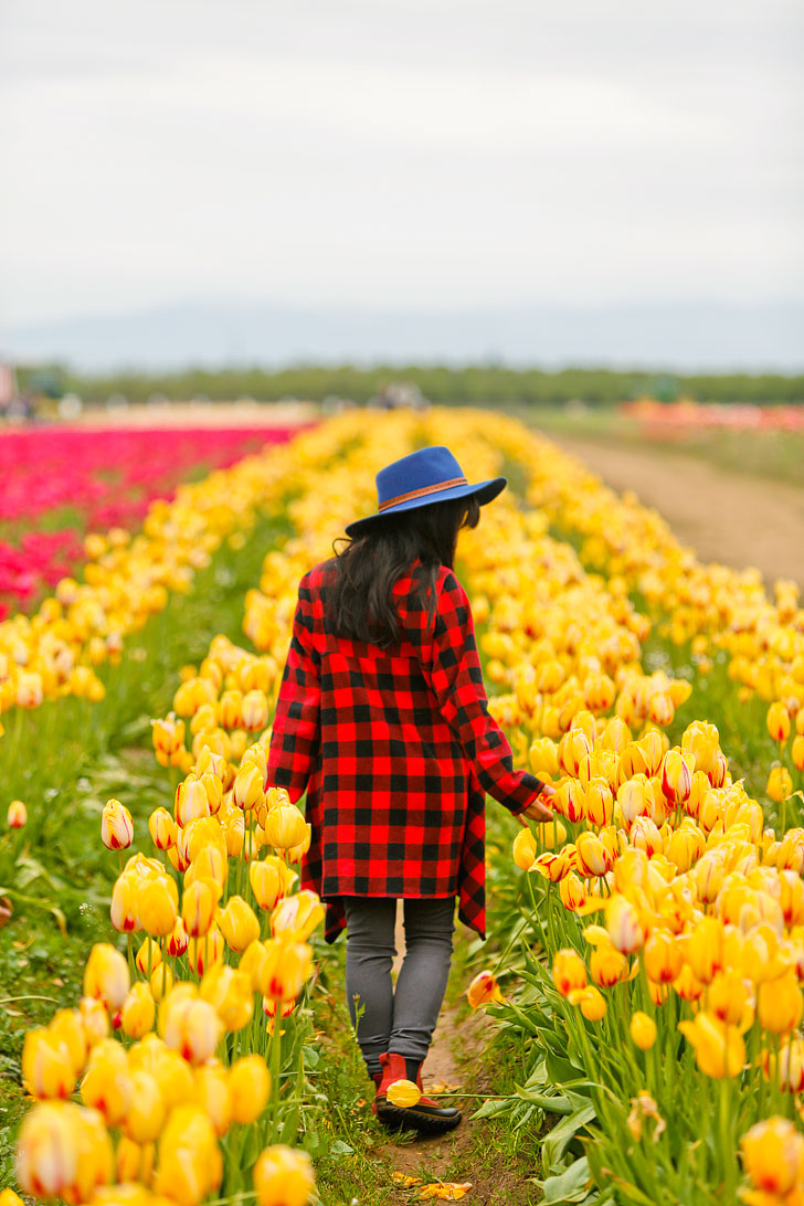 Your Ultimate Guide to the Woodburn Tulip Festival Oregon - What You Need to Know Before You Go - More Amazing Tulip Festivals in the US You Must See // Local Adventurer