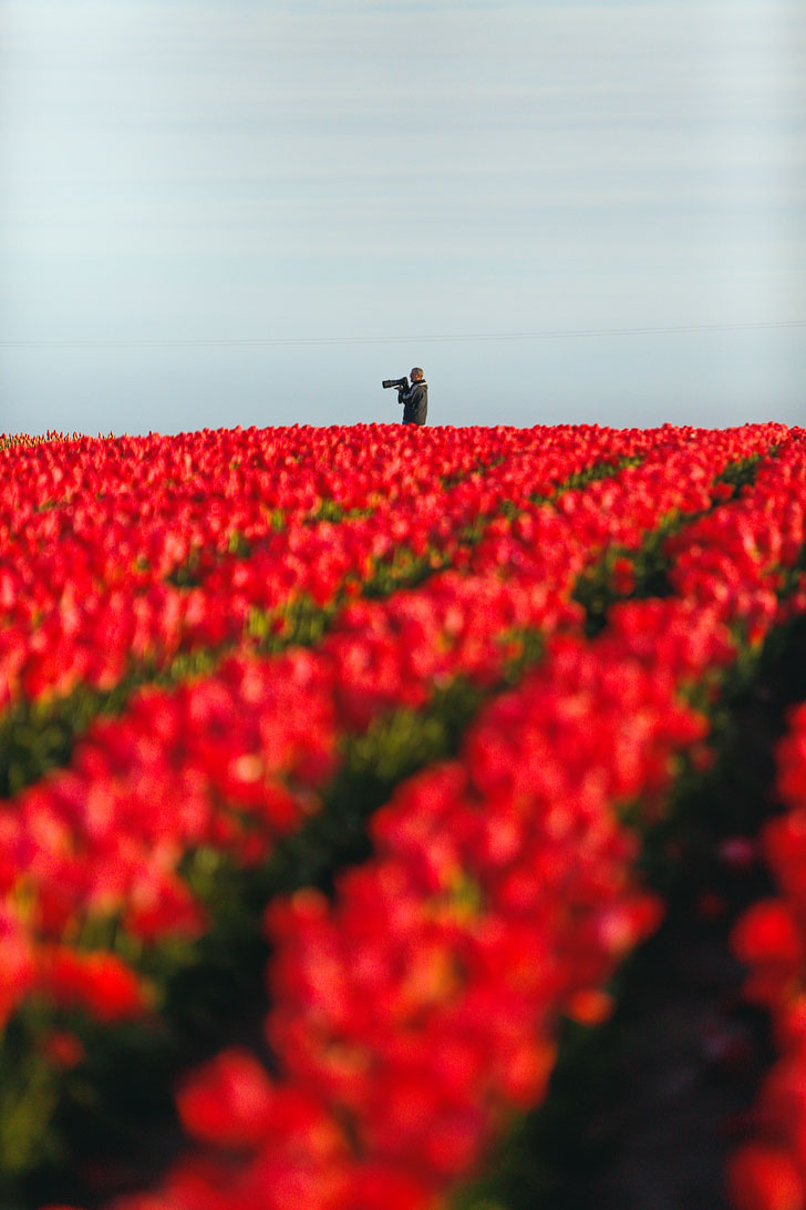 What You Need to Know Before Visiting the Oregon Tulip Fields // Local Adventurer