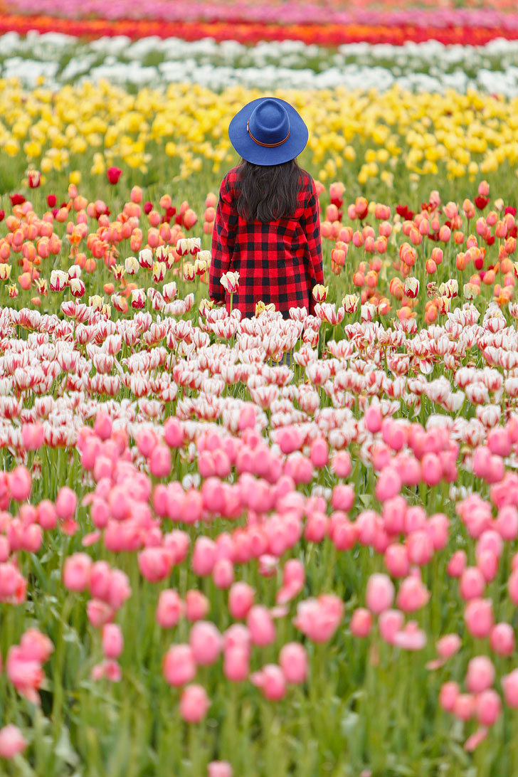 Everything You Need to Know About Visiting the Woodburn Tulip Farm + Tips for the Wooden Shoe Tulip Festival // Local Adventurer