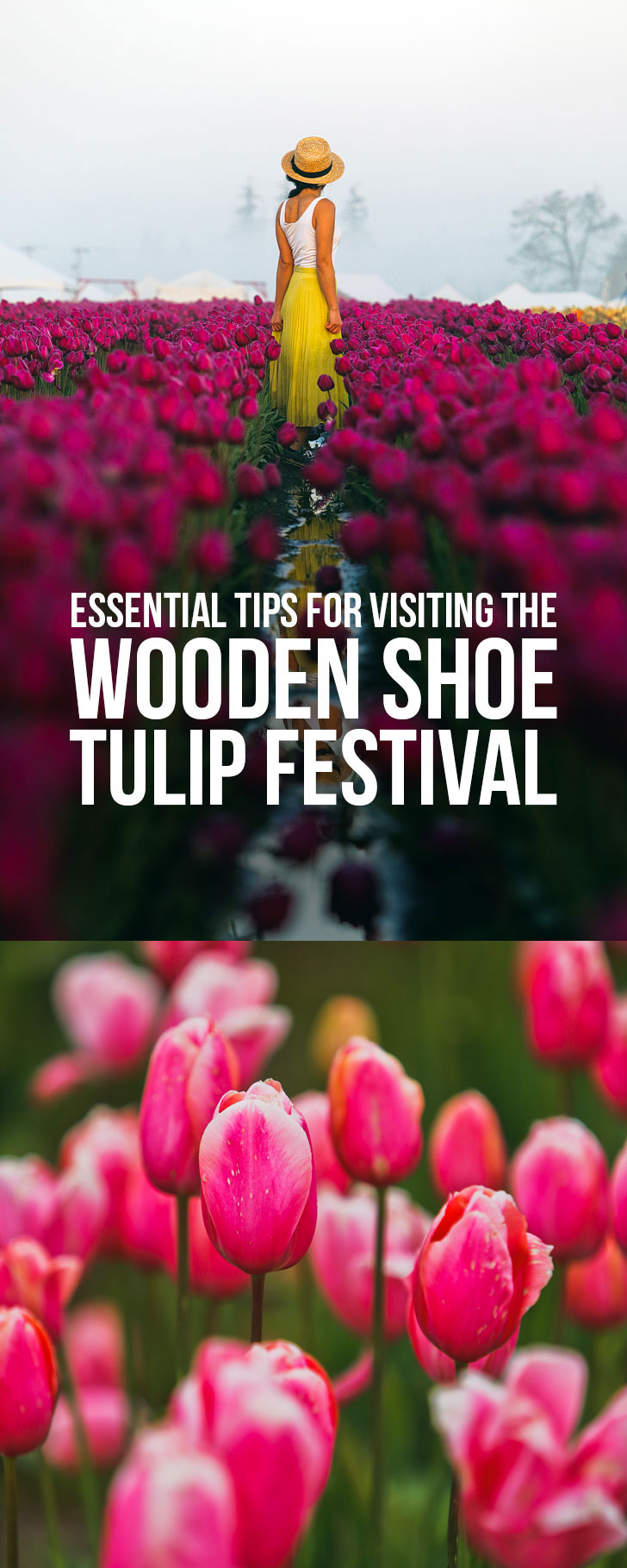 Essential Tips for Visiting the Tulip Festival Woodburn Oregon - 30-40 minutes south of Portland Oregon // Local Adventurer