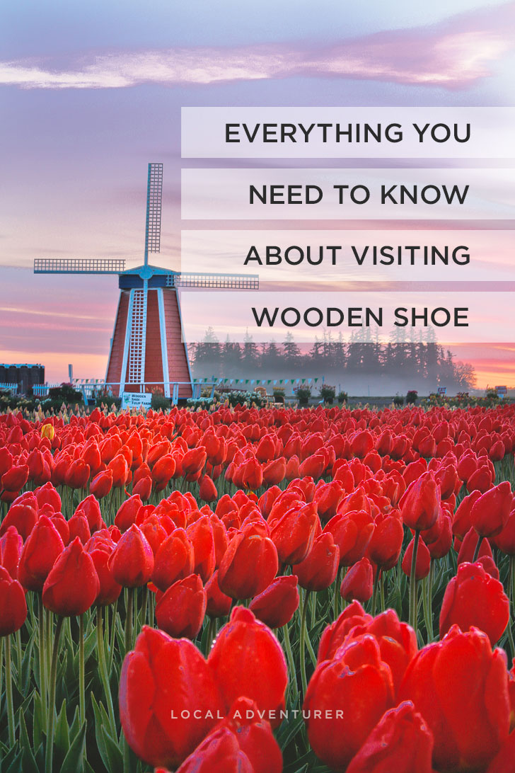 Everything You Need to Know About Visiting the Woodburn Oregon Tulip Fields + Essential Tips for the Wooden Shoe Tulip Festival // Local Adventurer