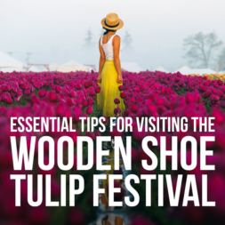 Essential Tips for Visiting the Wooden Shoe Tulip Festival Oregon