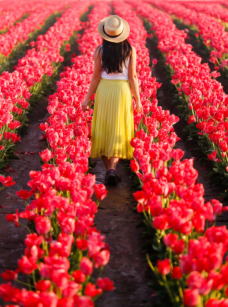 Everything You Need to Know About the Woodburn Tulip Farm Oregon // Local Adventurer