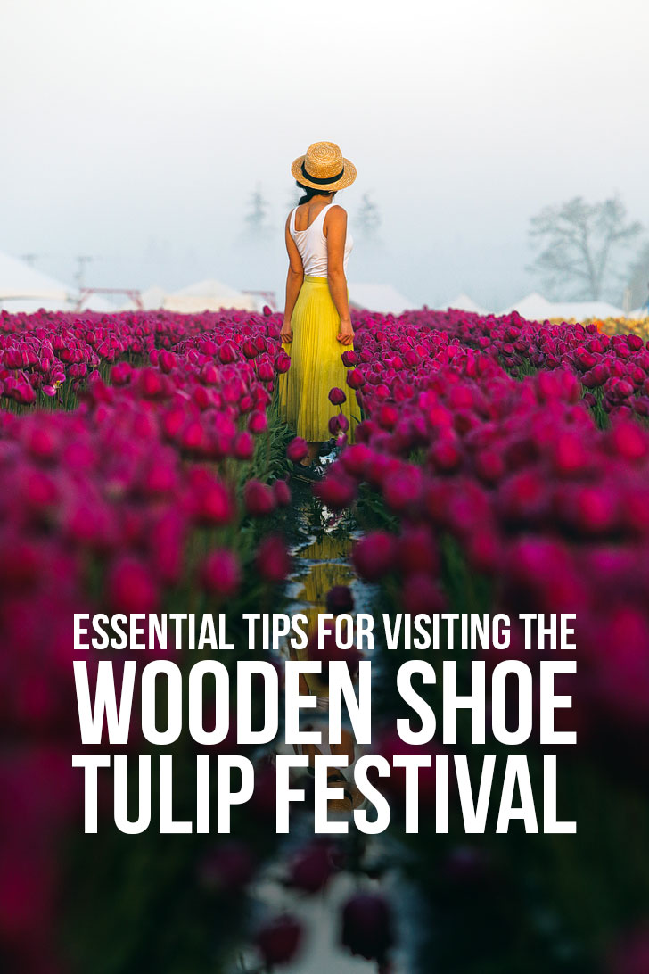 Essential Tips for Visiting the Woodburn Tulip Festival Oregon - 30-40 minutes south of Portland Oregon // Local Adventurer