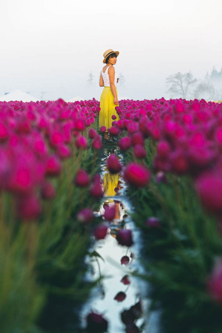 Your Ultimate Guide to the Wooden Shoe Tulip Festival Oregon - What You Need to Know Before You Go - More Amazing Tulip Festivals in the US You Must See // Local Adventurer