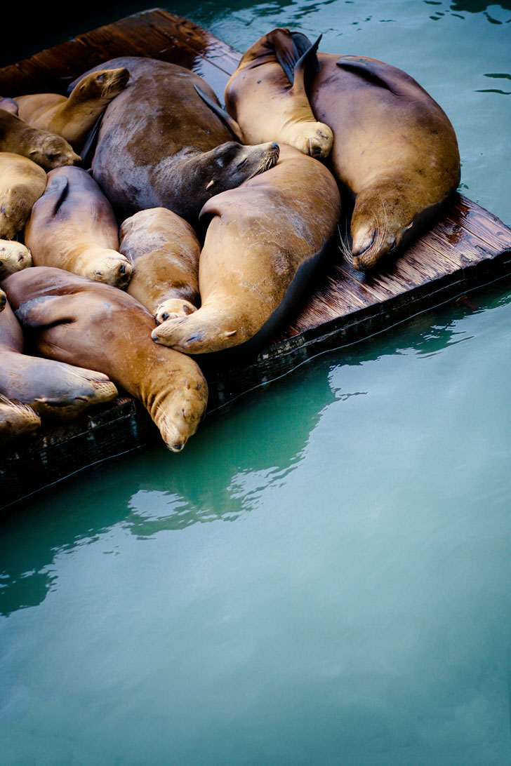 Listening to (and smelling) the Sea Lions at Pier 39 + 25 Fun Free Things to Do in San Francisco // Local Adventurer #sf #bayarea #california