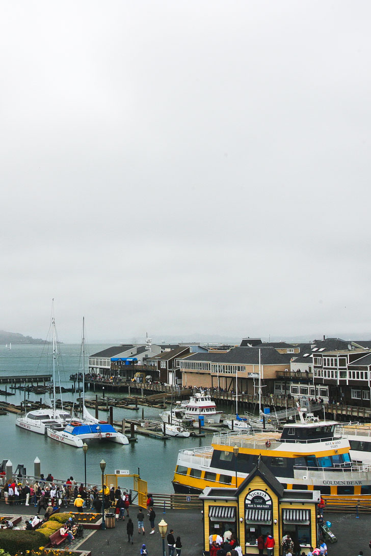 Listening to (and smelling) the Sea Lions at Pier 39 + 25 Fun Free Things to Do in San Francisco // Local Adventurer #sanfrancisco #bayarea #california